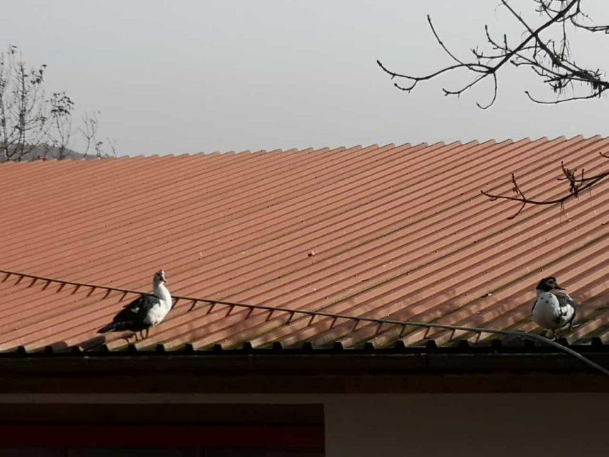 Enten sonnen sich