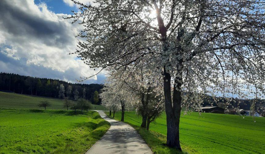 Sonne in Spiesberg