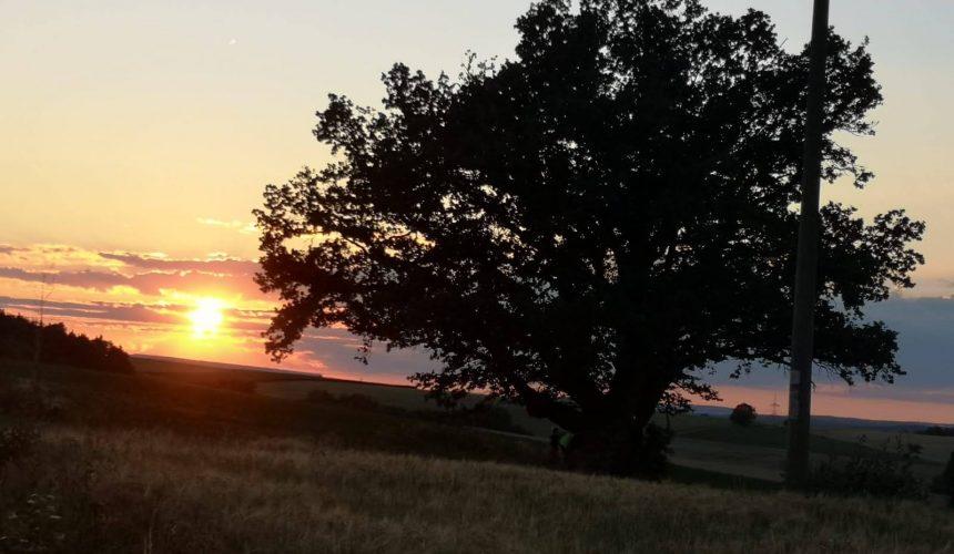 Sonnenuntergang am Wunderbaum